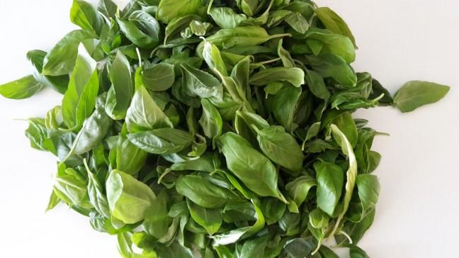 tartósítsuk a friss fűszernövényeket