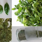 How To Dry Fresh Herbs?