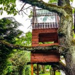 Building a Tree House For Your Kids