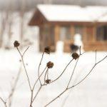 Prepare Your Backyard for the Winter