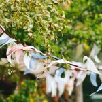 5 Tips for an Effortless Outdoor Party