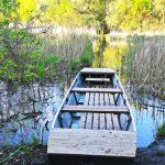 Többnyári kaland – vadregény a Tisza-tónál