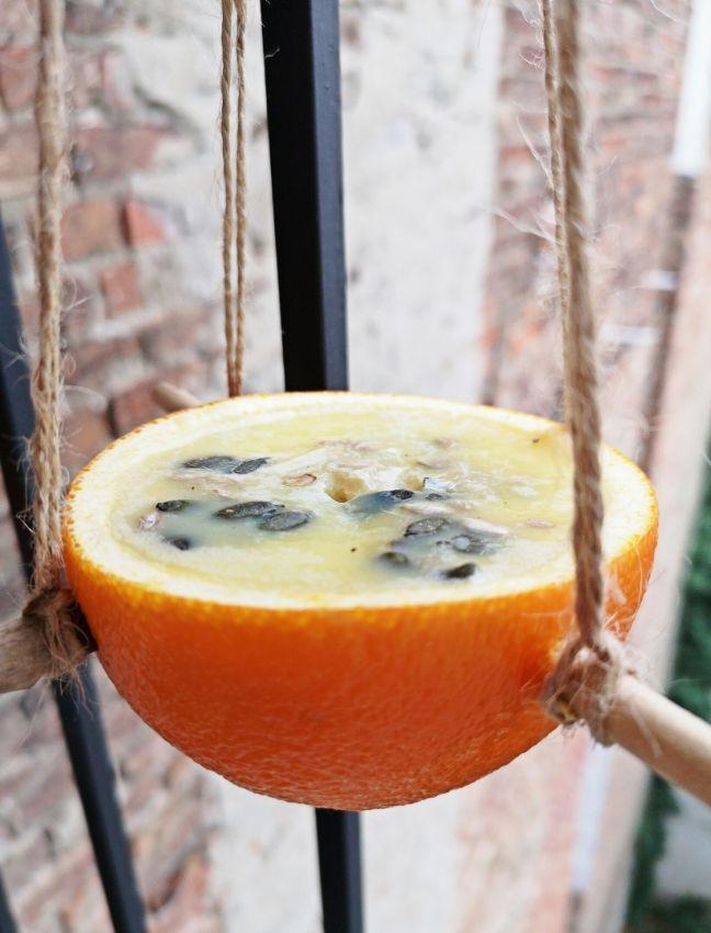 madáretető kifacsart narancsból