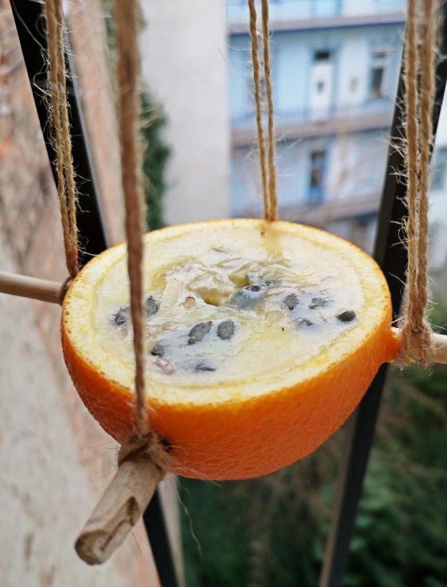 madártető kifacsart narancsból