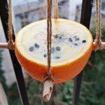 Legyünk természetesek – madáretető kifacsart narancsból