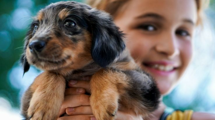 save on pet expenses
