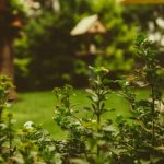 5 Things You're Doing Wrong With Your Garden