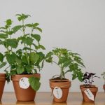 How To Create an Indoor Fragrant Herb Garden