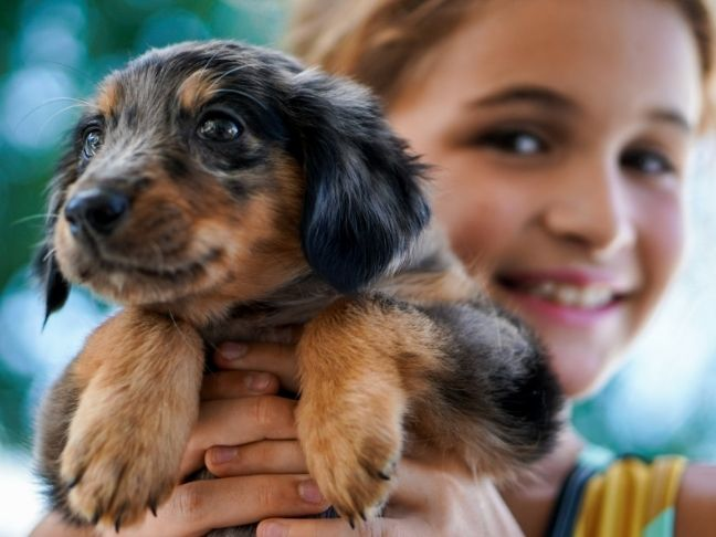 things to know before getting a pet