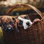 Dog Breeds that Make Great First Pets for Kids