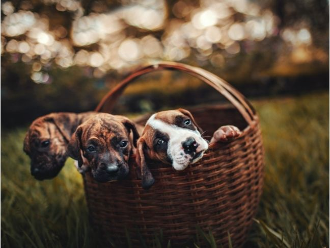 dog breeds for kids