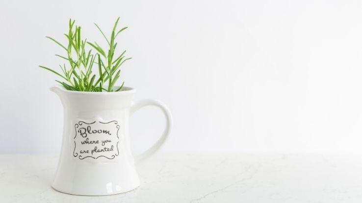 herb mug garden