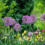 Find your Flowers: 5 Best Summer Flowers For your Garden